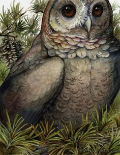 Coniferous Owl Print by windfalcon on Etsy