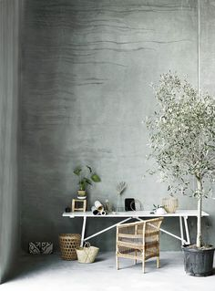 While I've loved seeing fiddle leaf figs in design projects with their big glossy leaves, I'm ready for the indoor olive tree plant trend to take over in Interior Styling, Interior Decorating, Interior Design, Desk Styling, Simple Interior, Prop Styling, Decorating Ideas, Wabi Sabi, Indoor Olive Tree
