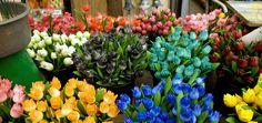 Blumenmarkt auf dem Wasser schwimmend mit Blumen und kleinen Andenken, täglich 9:30 bis 18:00, an der Herengracht