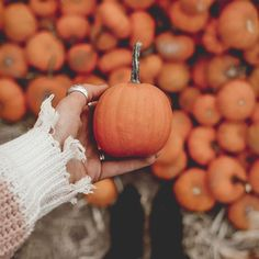 Fall Bucket List 🍁 Just posted my Fall Bucket List post! If you want some fun ideas of things you can do this fall to get into the fall spirit, click the link in my bio! Baby In Pumpkin, Cute Pumpkin, Pumpkin Spice, Pumpkin Patch Pictures, Pumpkin Photos, Pumpkin Patch Photography, Pumpkin Picking, Fall Wallpaper, Pumpkin Wallpaper