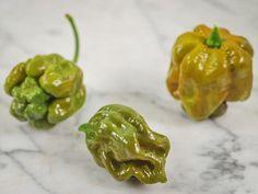 Mustard Trinidad Scorpion Hot Pepper Heirloom Garden Seeds