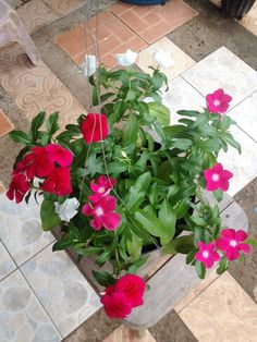 Hanging Pot Of Flowers