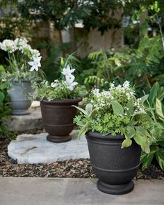 Gardening Tomatoes With Containers trio of stone-like resin outdoor self-watering urn planters in a garden - Resin Planters, Stone Planters, Outdoor Planters, Growing Tomatoes Indoors, Growing Tomatoes In Containers, Grow Tomatoes, Dried Tomatoes, Elevated Planter Box, Planter Box With Trellis