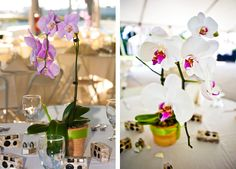 Google Image Result for http://www.mywedding.com/blog/wp-content/gallery/parker-granatino/orchids-centerpiece-cameras-tables-wedding.jpg