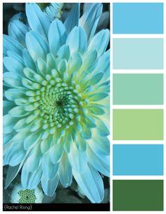 Blue Flower Color Scheme, #bluecolorscheme, #blue, #flowercolorscheme, #flower, #colorscheme
