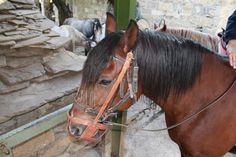 ¿Puede un caballo reconocer a su dueño viéndolo?
