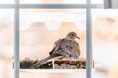Why Do Birds, Birds And The Bees, Tiny Bird, Small Birds, Birds Flying Into Windows, Ro Do, Audubon Society, Wild Birds, Beautiful Birds