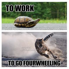 Me to go to work/Me to go fourwheeling. #trailjeeps #offroad #fourwheeling #4x4 #jku #rockcrawling #jeep #its_a_jeep_thing #meme ----------------------------------- http://www.trailjeeps.com