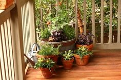 CHOOSE THE RIGHT CONTAINER FOR YOUR PLANTS