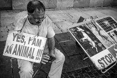 Animal..? | Flickr - Photo Sharing!