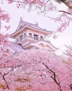 Cherry blossom on the ancient japanese castle - Petra Schwarz - Pin To Travel Belle Image Nature, Beautiful World, Beautiful Places, Beautiful Flowers, Natur Wallpaper, Asian Wallpaper, Cherry Blossom Japan, Japanese Cherry Blossoms, Japanese Blossom