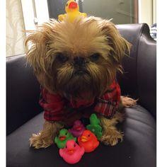 Billie and Her Ducks