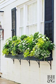Repetition is a foolproof way to create a cohesive look in a window box. This Repetition is a foolproof way to create a cohesive look in a window box. This box is planted with repeating groups of plants for a sense of flow and order. Pin: 600 x 900 Window Box Plants, Fall Window Boxes, Window Box Flowers, Window Planter Boxes, Planter Ideas, White Planter Boxes, Cottage Windows, Garden Windows, Plantar