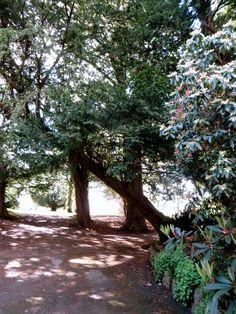 Botanic Gardens, Glasnevin, Dublin  (Photo by Zuzanne)
