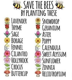 Save the bees with these plants Bee Facts, Save The Bees, Bee Happy, Bees Knees, My Secret Garden, Bee Keeping, Dream Garden, Garden Planning, Garden Inspiration