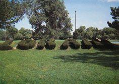 Brady's Bunch of Lorain County Nostalgia Lorain Ohio, Lake View, Vintage Ads, Dolores Park, Nostalgia, Wedding Ideas, Memories, Seasons, Usa