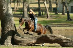 10 Natural Horsemanship Lessons That Apply To Life