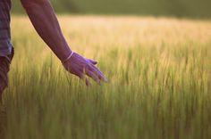 Barley field by Karen Buttery on 500px