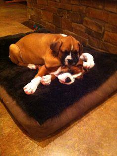 Big boy Gus sleeping on bubba
