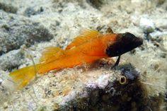 Kleine Bewohner der Meere Tauchen Insel Krk (Kroatien) Olympus TG-3 (Makro) Fish, Pets, Animals, Diving, Training, Swimming, First Aid, Animales, Animaux