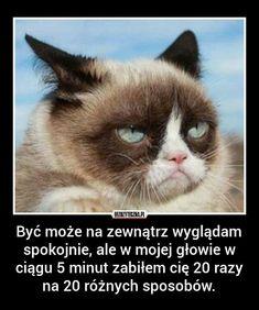 null #amreading #books #wattpad Funny Cats, Funny Animals, Polish Memes, Hate Mornings, Morning People, Grumpy Cat Humor, Coffee Humor, Coffee Coffee, Coffee Break