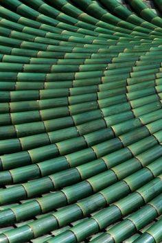 #Bambou #Bamboo