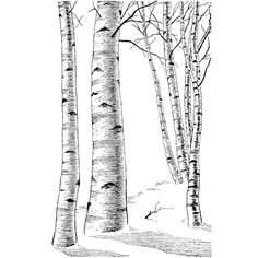 Birch Trees by TheEmberRaven.deviantart.com on @deviantART ...