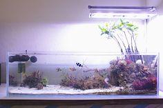 Brad's Natural Reef Mangroves, Macros, and Aquarium Setup, Aquarium Design, Marine Aquarium, Reef Aquarium, Nature Aquarium, Aquarium Ideas, Saltwater Aquarium Fish, Saltwater Tank, Freshwater Aquarium