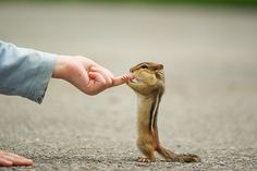 This could happen...I know because I have a little one who comes and eats seeds I put out every a.m.  definitely CUTE