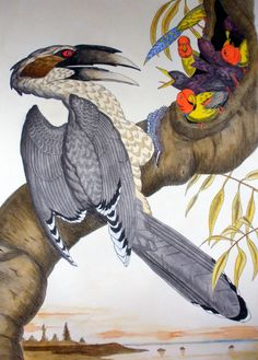 African Grey Hornbill by Walton Ford, 1998. Six-colour etching, and aquatint with drypoint