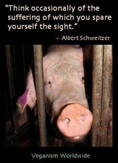 """""""Piensa de vez en cuando en el sufrimiento del que apartas la vista."""" Albert Schweitzer"""