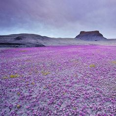 Image detail for -Badlands National Park, USA - Luoghi spettacolari - Fotostory di ...