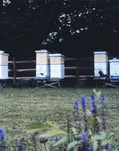 There are several things you should consider before you become a beekeeper, but they are no different than if you were to going to begin caring for any other animal ... dogs, cats, chickens or llamas. First, where will you keep them? Many beginners don't even think beyond their backyards, and that's a good place to start, but don't take bees, backyards, zoning, neighbors and your family for granted. Check them all out first.   - PopularMechanics.com