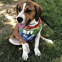 Pin By Cheryl Mcqueen Borsodi On Adoptable Dogs Pets Redbone Coonhound Adoption