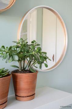sfeerplant