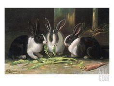 Three Black and White Dutch Domestic Rabbits Giclee Print at Art.com