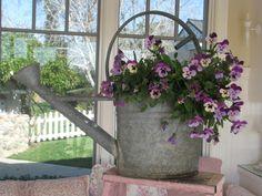 Pansies in watering can Beautiful Flowers, Flower Pots, Garden Containers, Flower Arrangements, Flower Planters, Flowers, Container Flowers, Flower Boxes, Flower Garden