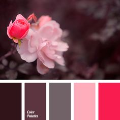 Design Seeds – color inspiration maybe the bathroom with the pink tile – main Bathroom ideas color palettes Colour Pallette, Color Palate, Colour Schemes, Color Combos, Color Patterns, Color Tones, Design Seeds, Color Concept, World Of Color