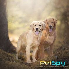 Best Shock Collars with remote gives you the power to prevent unwanted and possibly dangerous situations. Buy Dog Training Collars here. Dog Training Videos, Training Your Dog, Electric Fencing, Electric Dog Collar, Dog Shock Collar, Collar Designs, Dog Owners, Collars, Teaching