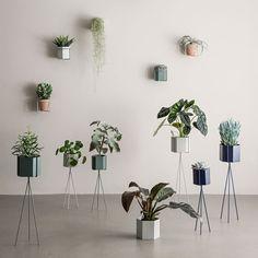 """Für alle, die sich mit etwas mehr Grün umgeben möchten bringt Ferm Living eine ganze Serie an attraktiven Pflanzenbehältern, Blumenampeln, Rankgittern, Töpfen und Pflanzenständern. Ob der Pflanzenbehälter """"Plant Box"""", die Pflanzenständer """"Plant Stand"""" oder die Rankgitter und Wandblumentopfhalter: die aus Eisen gefertigten Elemente sind … Weiterlesen"""