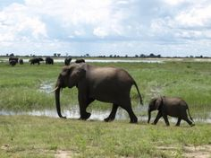 Traveler Q&A: Jessica Lipowski of and — This is Not a Guidebook Elephant Nature Park, Elephant Sanctuary, David Sheldrick Wildlife Trust, Kenya Travel, Save The Elephants, African Elephant, Chiang Mai, Guide Book, Central America