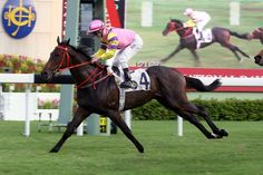 Purton to reunite with Brilliant Shine in Kwangtung Handicap Cup : International…