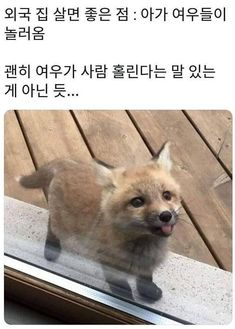 Funny Af Memes, Cute Cat Memes, Animals And Pets, Baby Animals, Cute Animals, Wild Animals Pictures, Animal Pictures, Anime Purple Hair, Shiba Inu