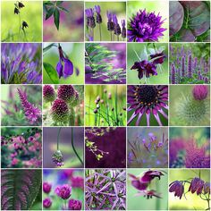 Purple & Green by LHDumes, via Flickr