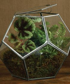 Pierre Faceted Terrarium at Bliss Home and Design