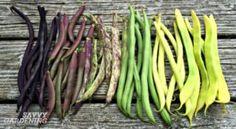 5 time saving tips for the vegetable gardener!