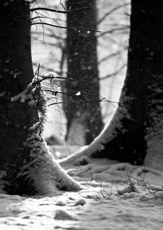 trees black and white photography