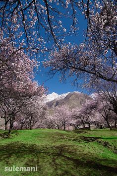 Full blooming Spring in Gilgit Balistan, Northern Pakistan. Gilgit Baltistan is, perhaps, the most spectacular region of Pakistan in terms of its geography and scenic beauty. Here the world's three mightiest mountain ranges: the Karakoram, the Handukuch and the Himalayas – meet. The whole of Gilgit Baltistan is like a paradise for mountaineers, trekkers and anglers.