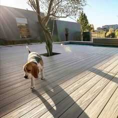 Attractive, innovative, and dependable wood plastic composite materials perfect for patios and dog loving families. Plastic Wood Decking, Composite Material, Mobile Home, Large Dogs, Families, Outdoor Decor, Ideas, Courtyards, Terrace