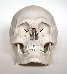 Male Human Skull Replica by artskulls